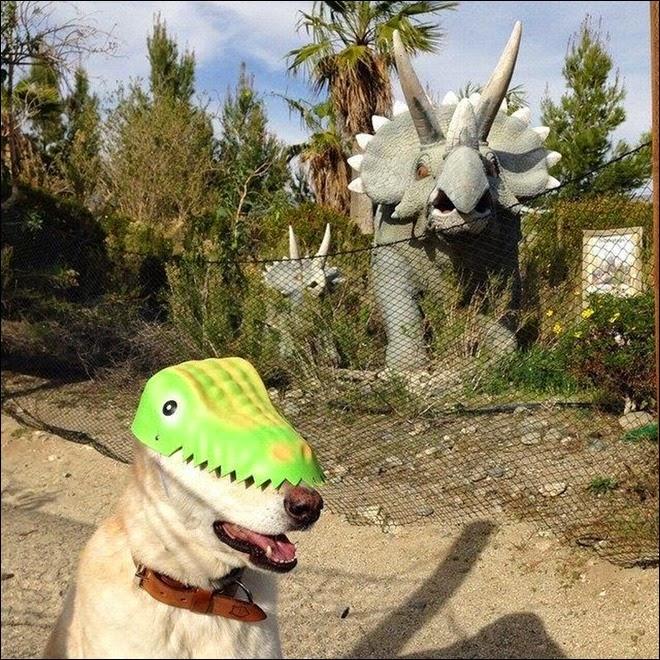 Foto engraçada de cachorra