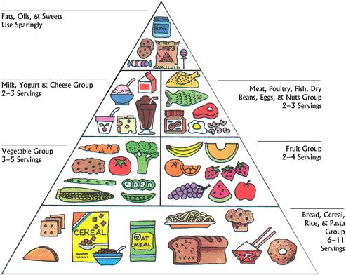 What Is Usda S Food Guide Pyramid