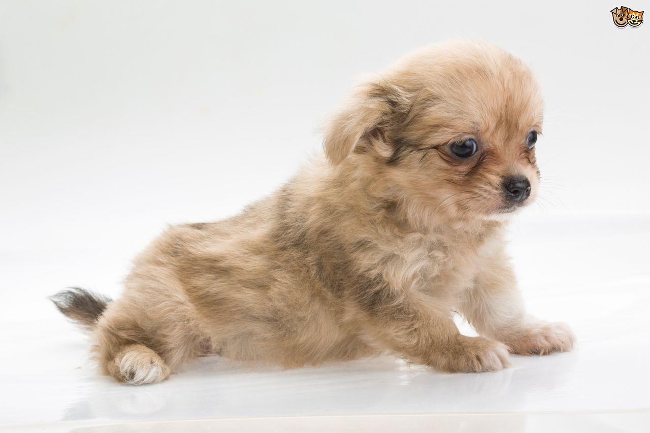 Small Dog Breeds  DOG Lover Blog
