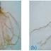 Struktur dan Fungsi Tumbuhan (Akar, Batang, Daun, Bunga, dan Biji)