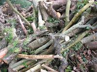 伐採された庭木