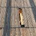 Βανδαλισμοί στον ξύλινο Πεζόδρομο της Αγ. Μαρίνας, στο Πόρτο Ράφτη.