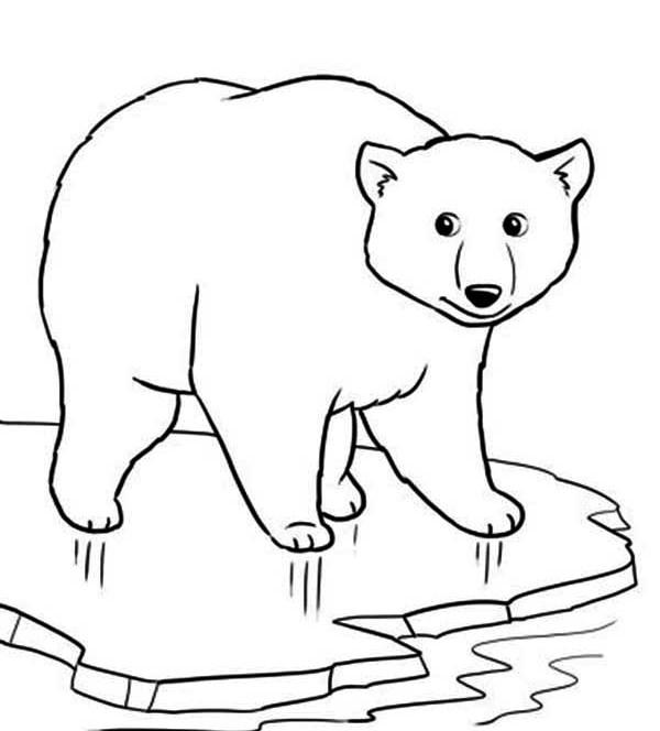 Belajar mewarnai gambar binatang untuk anak beruang yang for Coloring pages polar bear