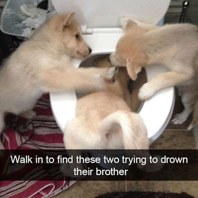 #Dogoftheday - #cute #weeklyfluff #delight_pets #dogsofinstagram #funpetloveclub #dogscorner #dogdailyfeaturesss #inspiredbypets #dachshund #beggintime #pet