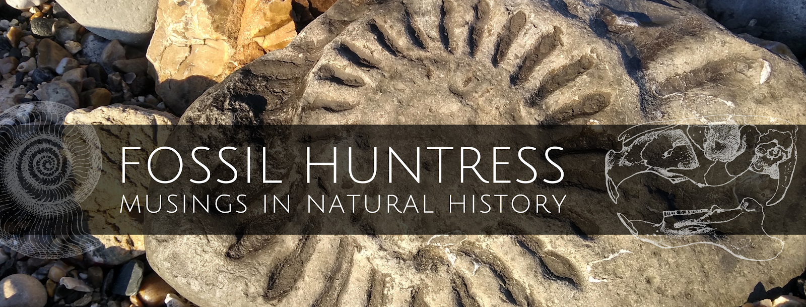 Fossil Huntress: Musings in Natural History
