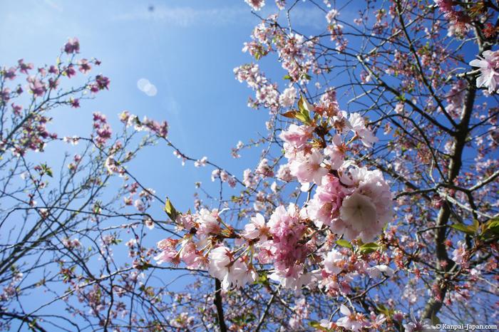 Japan in Spring