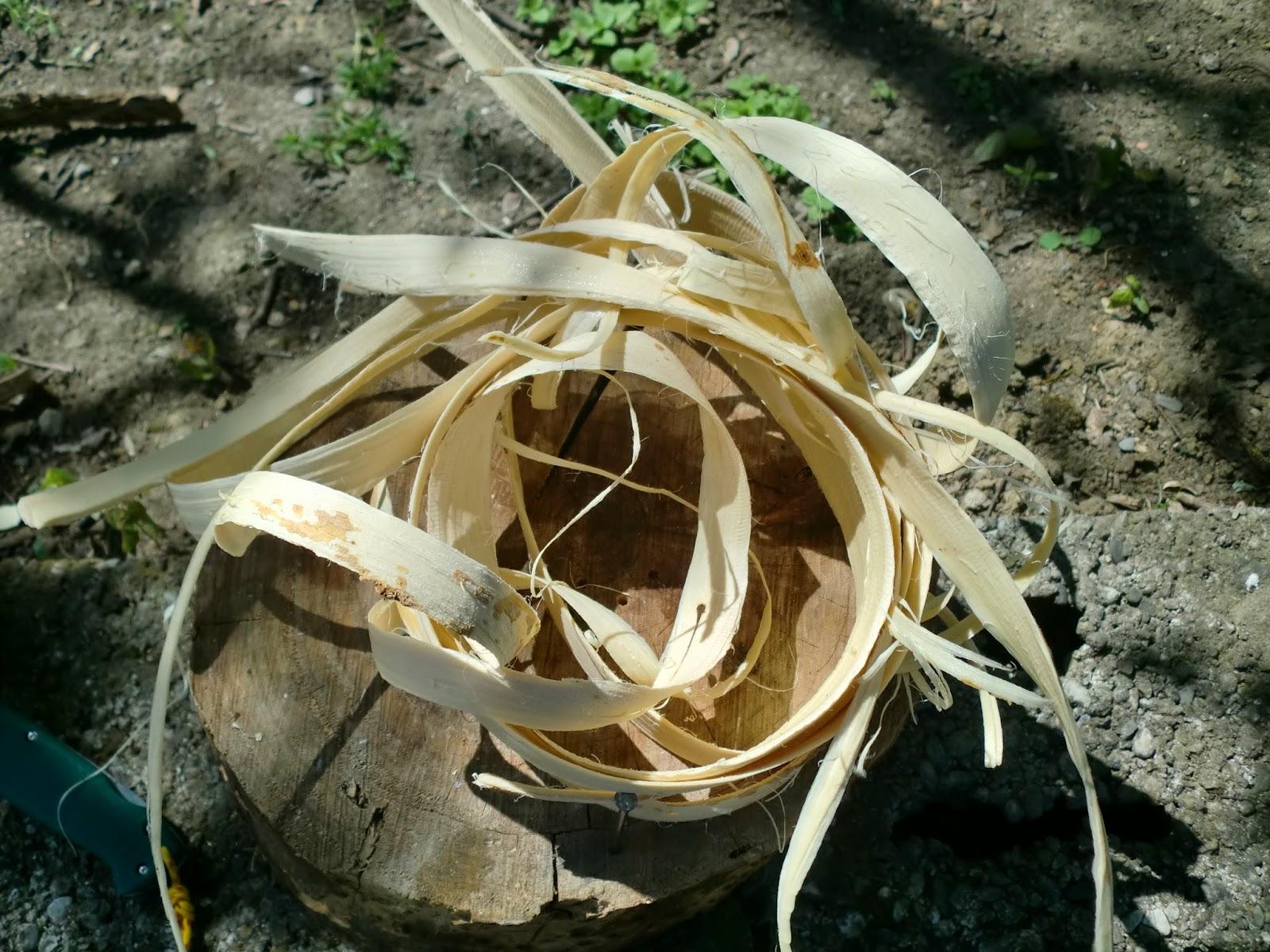 Cinghio Vs Wild: La Robinia - Pseudo Acacia in ...