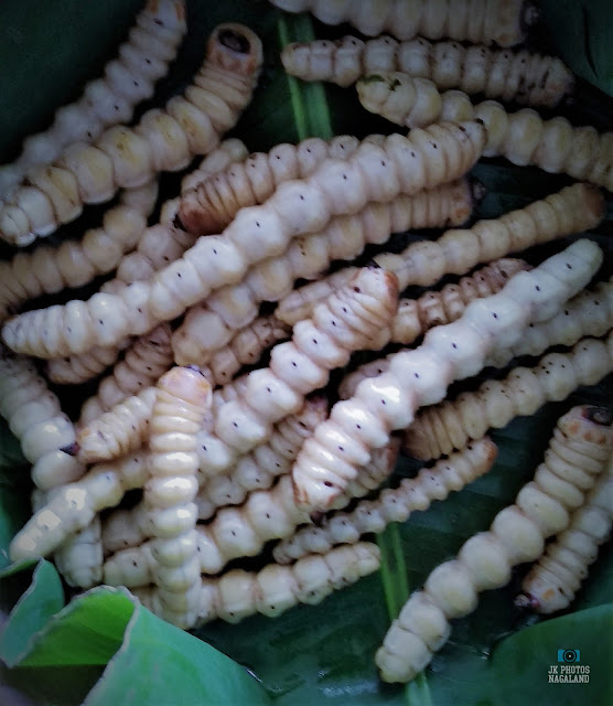 naga-food-items-insects-wood-worms