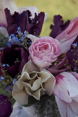 Odla lokvaxt tulpanerna foljer modets farger