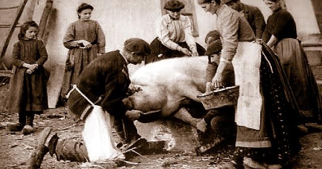 Schweine Schlachten Früher