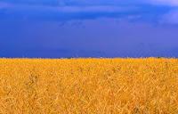 Украина флаг в виде природы