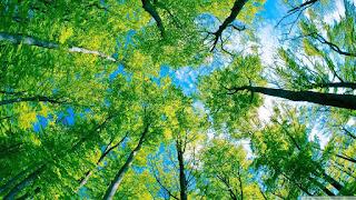 Pengertian Ekologi dan Sejarah Ekologi