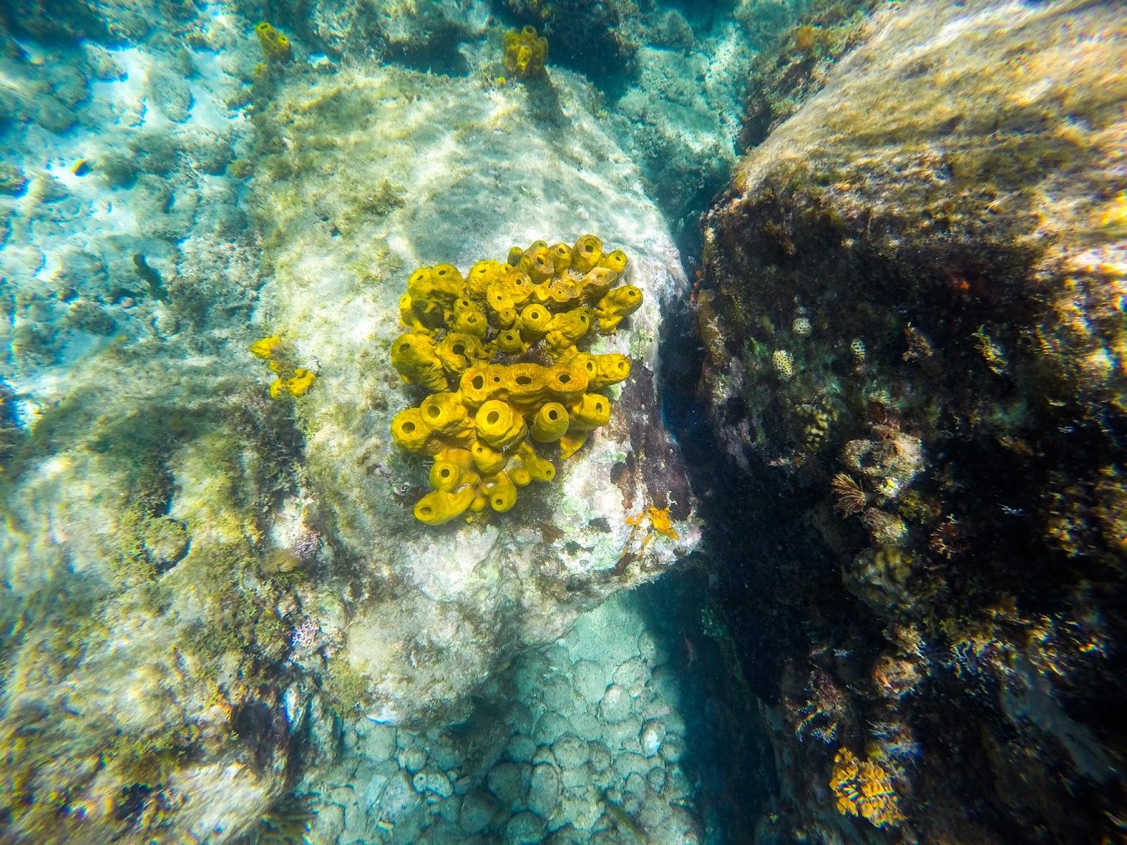 Martinique plongée