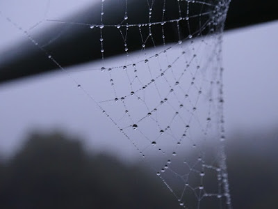 Spider silk is proportionally one of the strongest things in the world