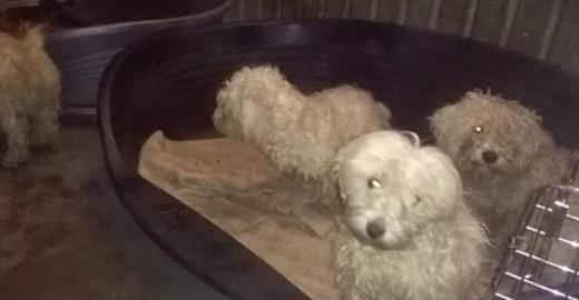 Dinant: une chienne et ses trois petits abandonnés dans un champ