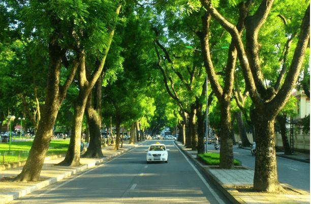 Khu-duong-cay-xanh-tai-du-an-an-thien-ly