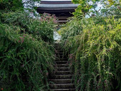 Hagi (Lespedeza) flowers: Kaizo-ji
