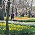 Ogród Keukenhof,
