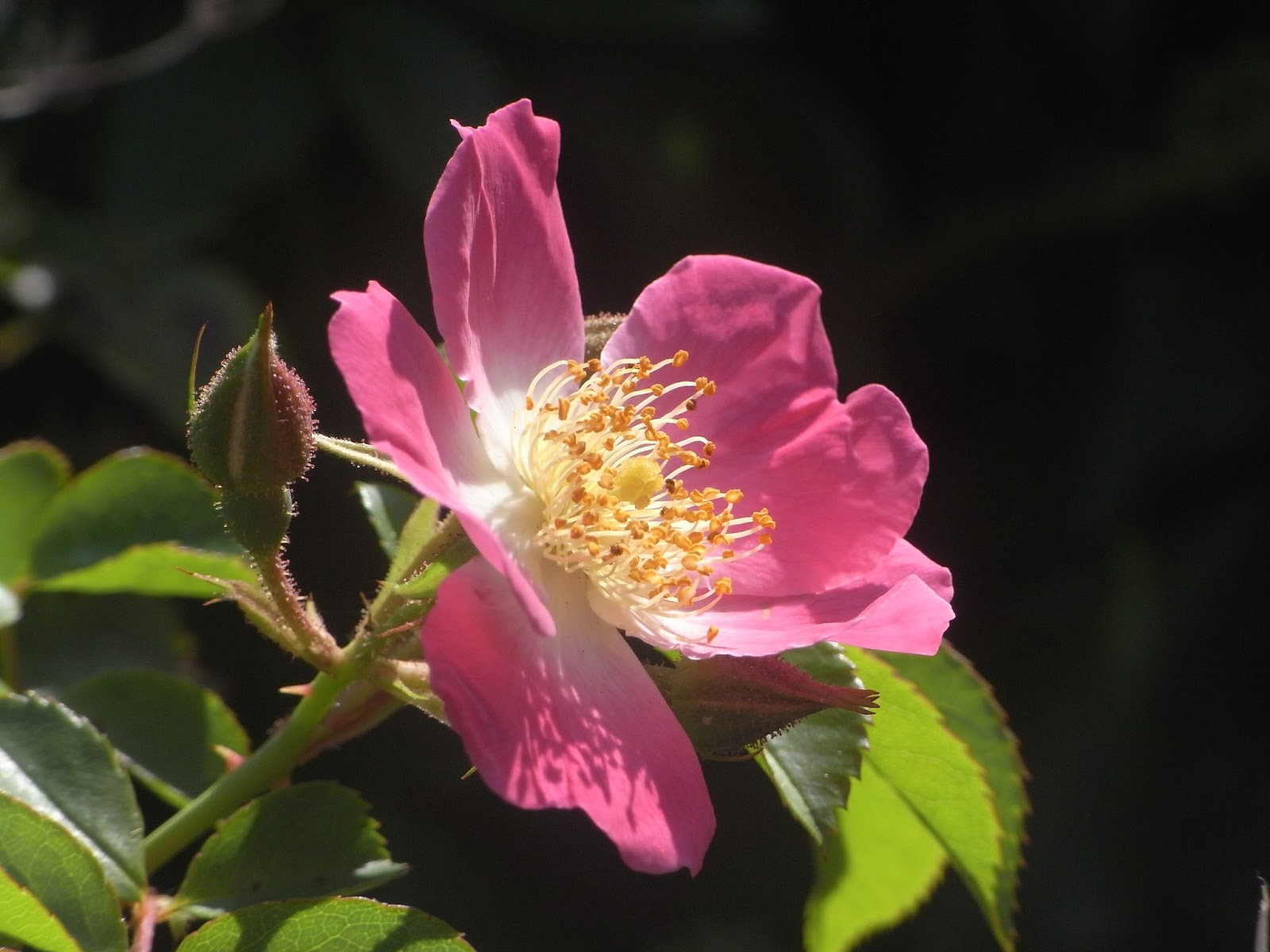 Radical Honey A Late Summer 39 S Day Of Small Beauties