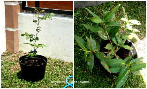 manfaat deterjen untuk tanaman
