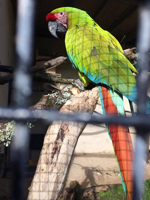 Macaw Paradise Park