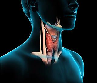 tiroides, hipotiroidismo