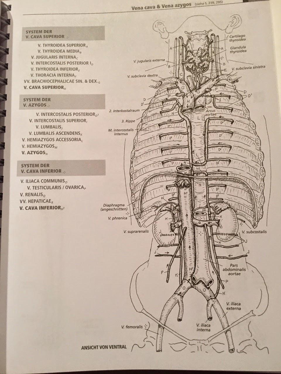 Wunderbar Wie Anatomie Zeichnung Lernen Zeitgenössisch - Menschliche ...