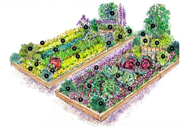 Cottage Garden Vegetable Garden Plans – Kitchen Garden Plans