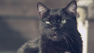 Kucing Hitam Marah