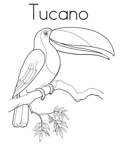 Blog De Geografia Tucano Desenho Para Imprimir E Colorir