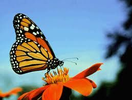 Inspired By – Monarch Butterflies