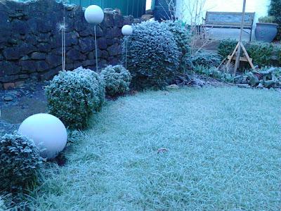 Winter evergreen structure Cutting back perennials Green Fingered Blog