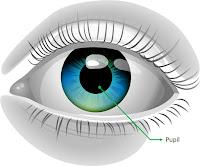 Pupil (pupil)