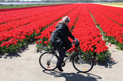 Biking Holland's beautiful tulip fields. Photograph of Janie Robinson, Travel Writer.  Brian Quinn photographer.