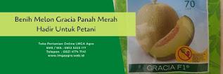 benih melon gracia,melon gracia,benih melon,budidaya melon,tanaman melon,lmga agro