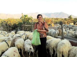 Chị Nguyễn Thị Năm, tỷ phú nuôi cừu trên đồng đất Thuận Nam.