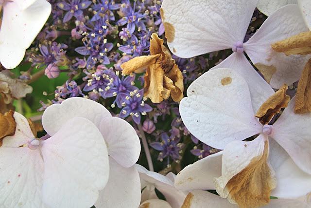 de mooiste foto's uit mijn tuin van augustus 2012