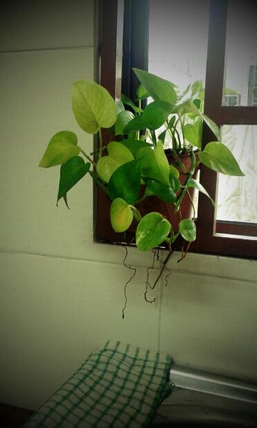 Pokok Dalam Rumah