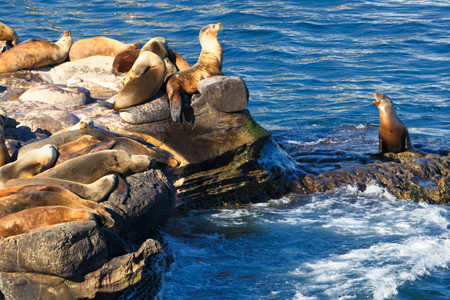 Sea lions sunbathing on rocks