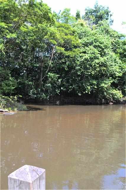 Guyane, Sinnamary, Crique Toussaint