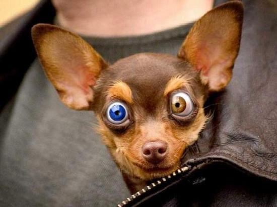 Amper Bae: funny dog face  Amper Bae: funn...
