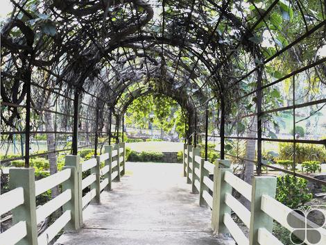Kakatiya Musical Garden - Warangal Rural Tourism