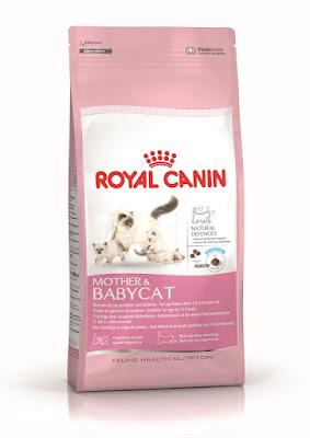 Pemeriksaan Kucing Percuma menerusi  Kempen MyCat2Vet Oleh Royal Canin Malaysia