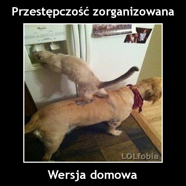 Lolfobia Pies I Kot W Akcji