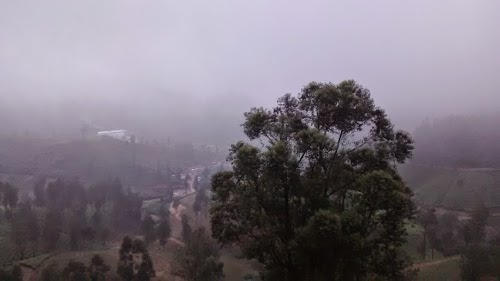cool misty climate of marayoor