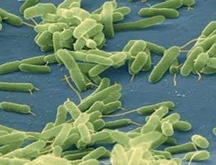 Vibrio Vulnificus Infection Symptoms and Treatment ...