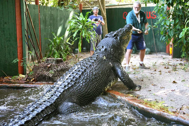 worlds biggest crocodile