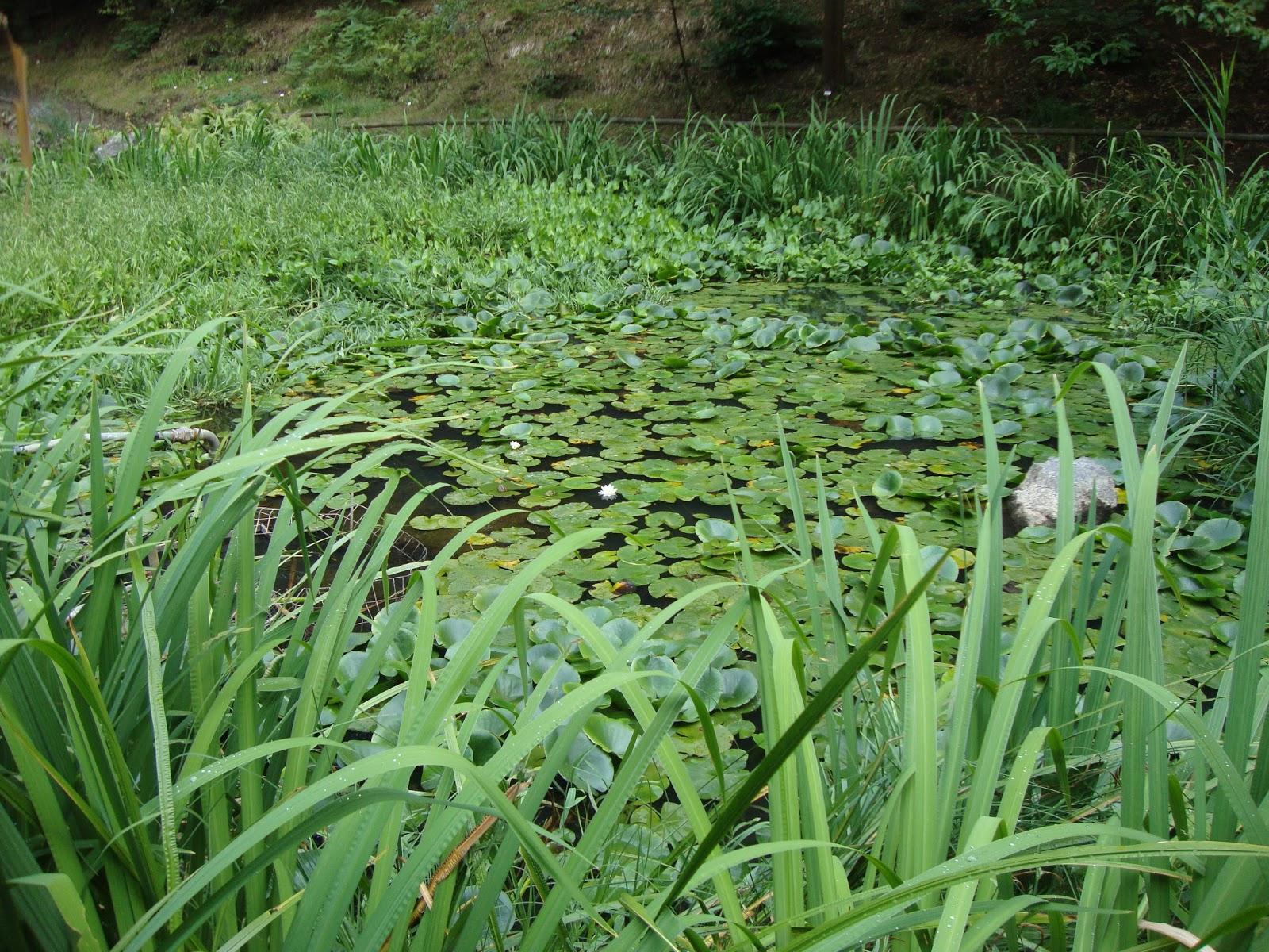Giardino Pietra Corva : Un piccolo giardino in città il giardino botanico alpino di