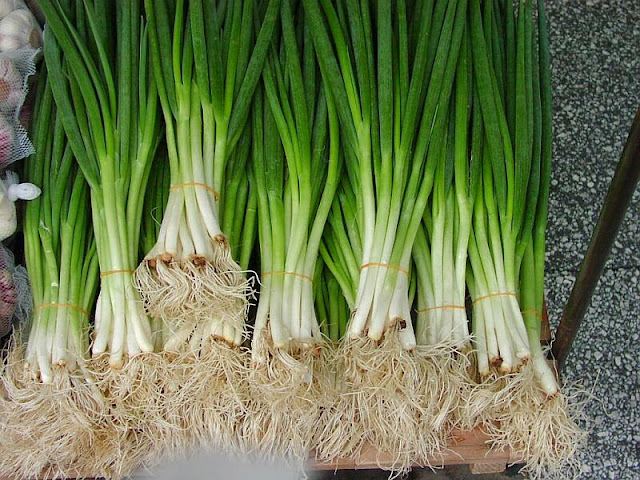 Health Benefits of Scallion for your bodyHealth Benefits of Scallion for your body