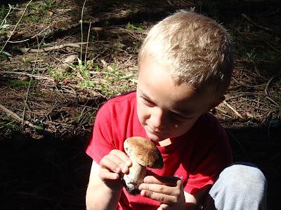 grzyby 2017, borowiki, grzyby w lipcu, grzyby na Orawie